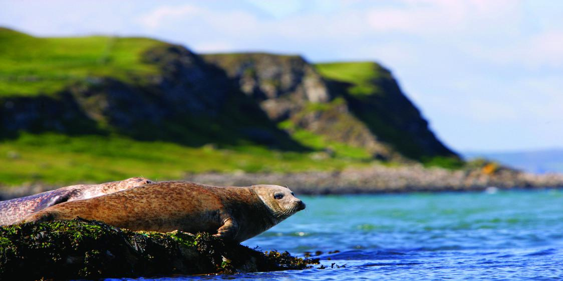 Rathlin Seals